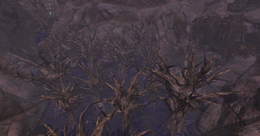 The Withered Lands