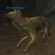 A hunting mongrel
