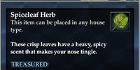 Spiceleaf Herb