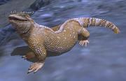 A cobalt lizard