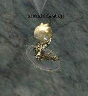 Marine slug