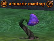 A tunaric mantrap