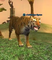A boldstripe tigress