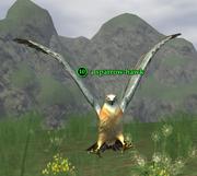 A sparrow-hawk