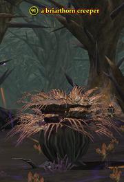 A briarthorn creeper