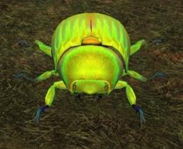 File:Race beetle.jpg