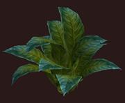 Leafy Vernal Shrub (Visible)