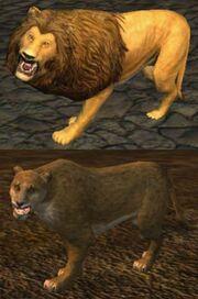 Race lion
