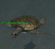 A deepsea loggerhead