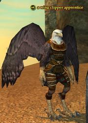 A wing clipper apprentice