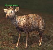 An infected deer