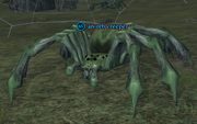 An orb creeper