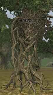 A root strangler