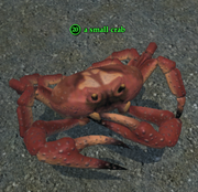 A small crab