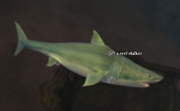 A reef stalker