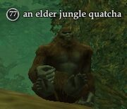 An elder jungle quatcha
