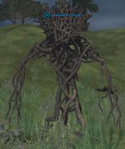 A twisted creeper