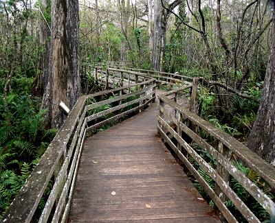 Swamp Path