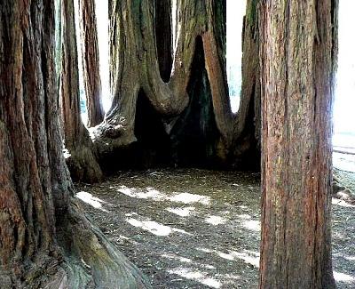 File:Oldwood Tree.jpg