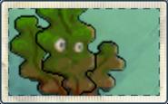 Oxygen Algae Seed Packet