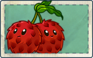 Lychee Bomb Seed Packet