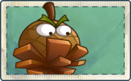 Hazelnut Ball Seed Packet
