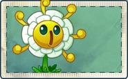 Golden Chrysanthemum Seed Packet