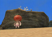 Tomate Perdido2.jpg
