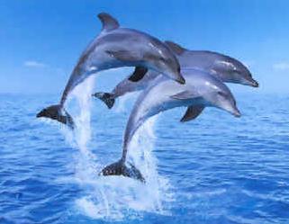 Archivo:80th Vice Delfines.png