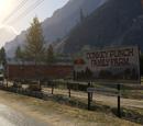 Donkey Punch Family Farm