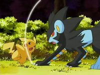 Archivo:EP528 Luxray atacando a Pikachu.png