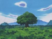 Archivo:EP313 Gran árbol.jpg