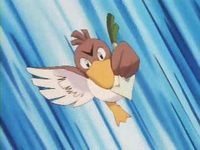 Archivo:EP049 Farfetch'd (6).png