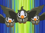 EP472 Starly.png