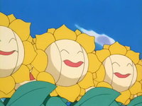 Archivo:EP189 Sunflora (2).png