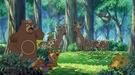 P11 Pokémon del bosque