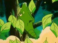 Archivo:EP146 Metapod golpeando un árbol con placaje.jpg