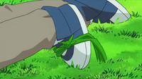 EP590 Snover usando hierba lazo