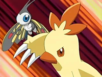 Archivo:EP464 Beautifly y Combusken.png
