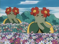 Archivo:EP182 Bellossom.png