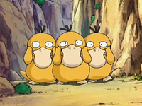 Archivo:EP556 Psyduck (2).png