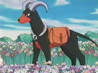 Archivo:EP182 Houndoom (5).png