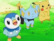 EP558 Piplup, Shinx y Pikachu
