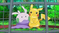 EP859 Pikachu y Goomy