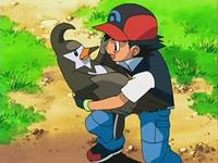 Archivo:EP535 Ash con Staravia en sus brazos.png