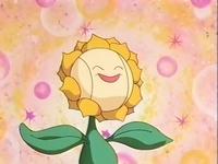Sunflora de Sonrisa