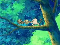 Archivo:EP474 Mankey y Geodude peleando en el árbol.png