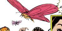 Mariposa venenosa antariana