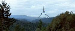 Tyridium bosques.jpg