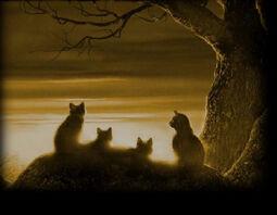 Los Gatos Guerreros Wiki Spotlight.jpg